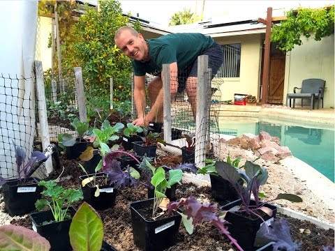Planting a Successful Backyard Garden - Amazing!