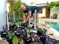 Planting a Successful Backyard Garden - Amazing!