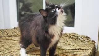 Особенная милая кошка Лилу