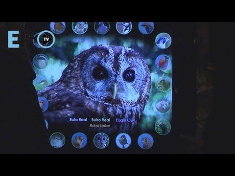 Museo das aves: turismo ornitolóxico e ambiental