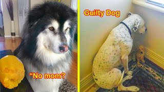 The 'Guilty Dog' Challenge