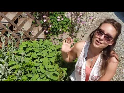 Grow Medicinal And Edible Herbs In Your Garden - Medicinal Plants Introduction (Herb Garden TOUR)