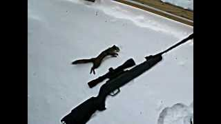 My First Squirrel in 2011 Thumbnail