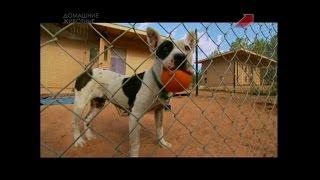 Город собак 01 02 15 Эпизод 3