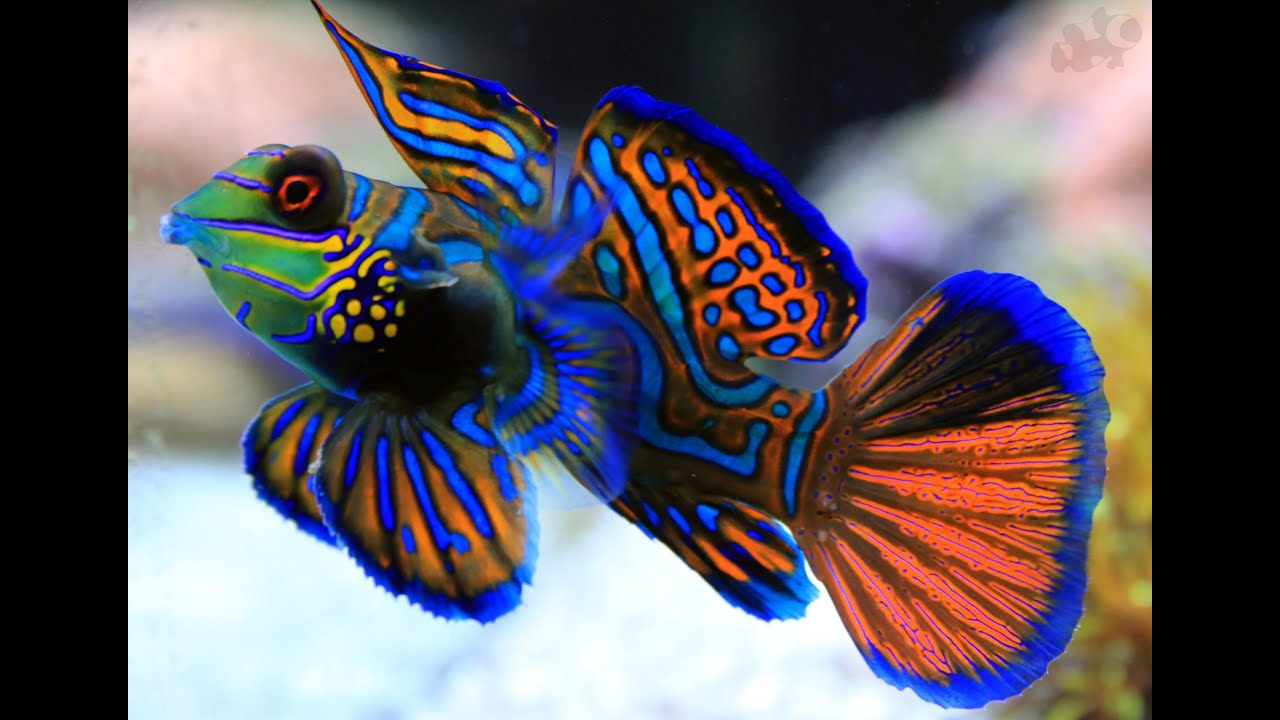 The most beautiful fish in the world: list, description and reviews 86