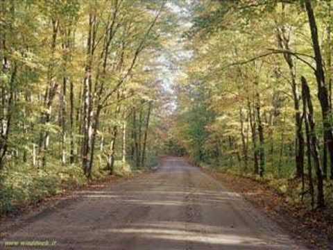 Fall Woods Wallpaper L Autunno Vivaldi Youtube