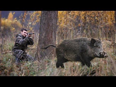 Best of Wild Boar Hunting 2021! Excellent Moments Compilation /Охота на кабана/Chasse au sanglier