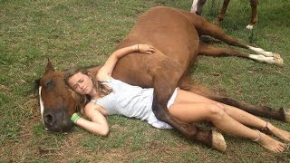 Funny Smart  Horses vs Owners Win Fail Try not to Laugh