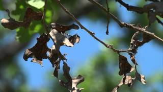 Tree fungus killing trees in the Brazos Valley