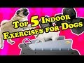 TOP 5 Indoor Exercises for Dogs | Best Exercises for Indoor Dogs or in Bad Weather