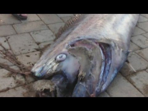 Giant 18-foot oarfish found off California coast