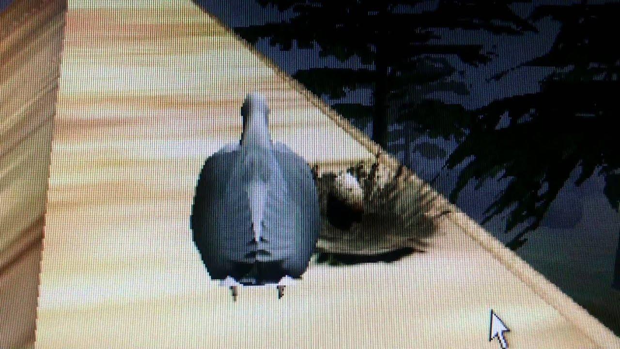 Летай как птица
