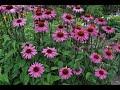 أغنية Heat Loving Perennials Garden Tour Garden Style Nw