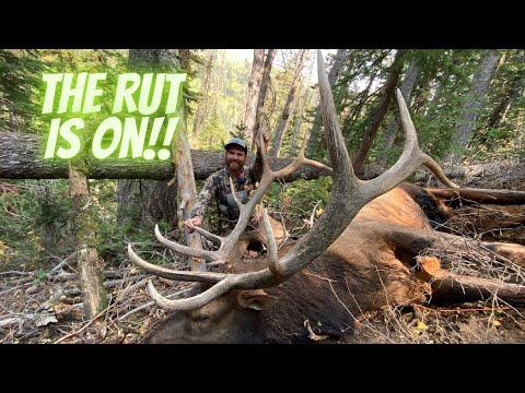 Elk Hunting In Utah {Limited Entry Muzzleloader}