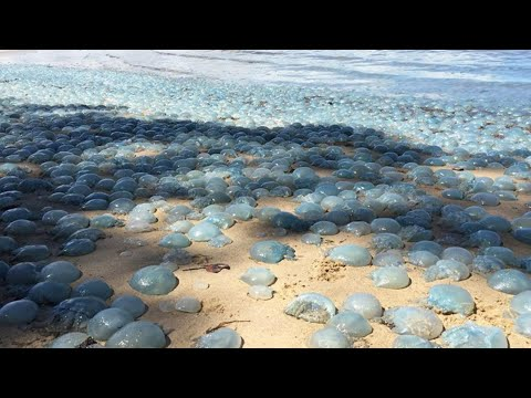 Hundreds Of Dead Jelly Fish Washed Up On The Beach!!Beach Day Vlog!!