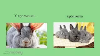 Домашние животные и их детеныши.
