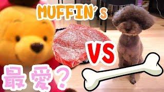 小熊維尼vs 骨頭vs 肉塊? - 麥狗物語- Funny Muffin dog #2 我用食物救...