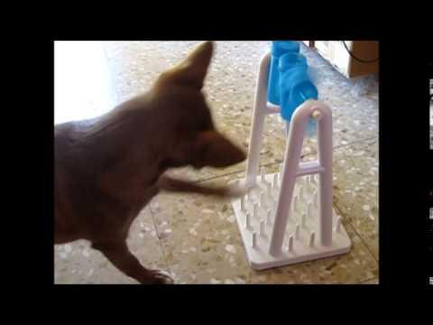Juegos De Inteligencia Para Perros 5 Youtube