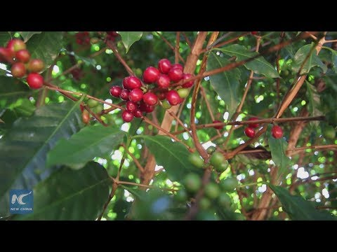 Brazilian producers look to specialty coffees ahead of China Import Expo