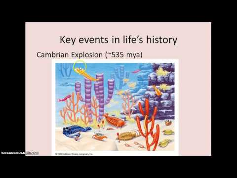 AP Biology Chapter 25