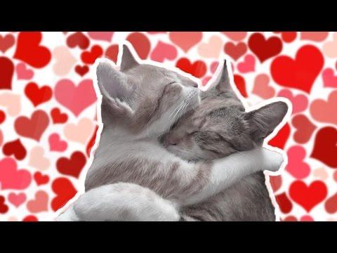 Кошки и любовь, влюбленные кошки на красивых картинках
