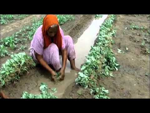 Soil Health Card scheme boosts agricultural productivity