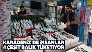 Balık Cenneti Karadeniz'de En Fazla Bu Balıklar Talep Görüyor