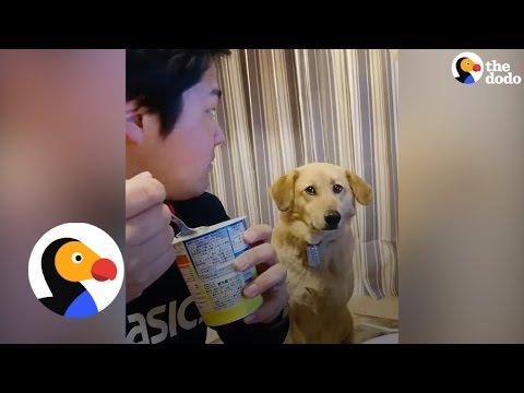 Funny Dog Wants Dad's Food But Is Too Shy To Ask | The Dodo