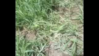 ivany machado no sitio  da tina