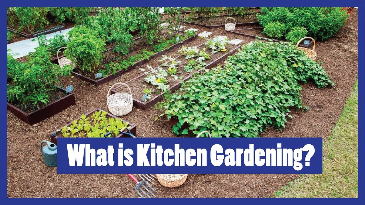 Kitchen Gardening What Is Kitchen Gardening Why Kitchen Gardening How To Grow