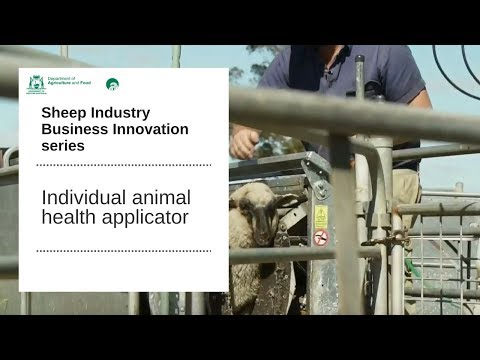 Individual animal health applicator | Department of Primary Industries and Regional Development