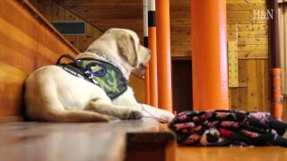 Service dog keeps young student healthy