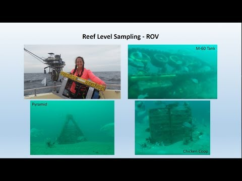A Spatially and Ecologically Balanced Approach to Artificial Reef Placement