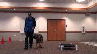 Kobi (american Alsatian) Boot Camp Level Iii. Dog Training