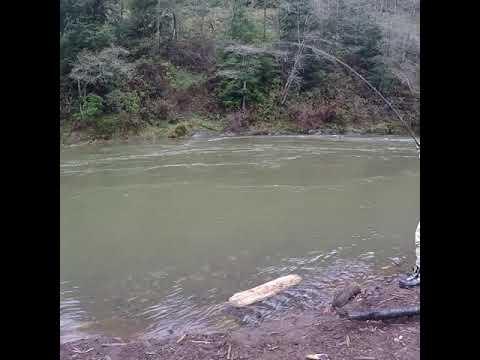 Wilson River 2017. Fish on!