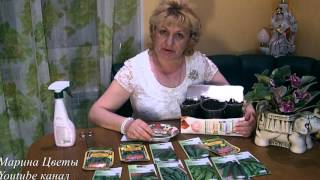 Сроки высадки огурцов и полив рассады