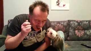 Собака кушает!  Китайская хохлатая обожает макароны!)