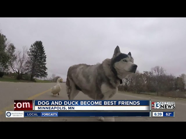 Dog and duck are best friends