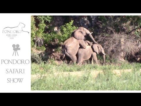 Elephant Transformation (jumanji)Kaynak: YouTube · Süre: 41 saniye