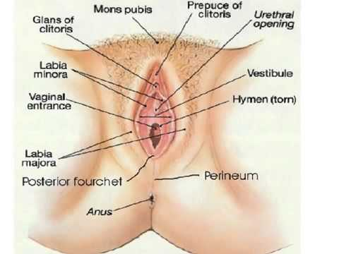 Vaginal Herpes Outbreaks Fast cures the all natural way