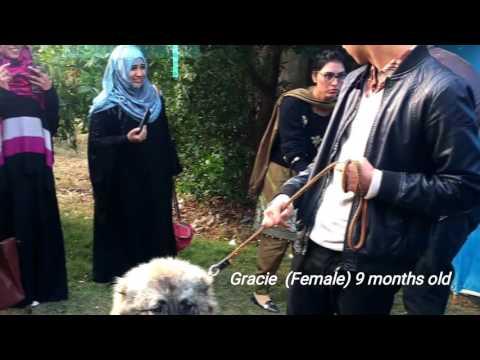 UOG (University of Gujrat Sialkot campus) zoological pet show 2017, winner dogs