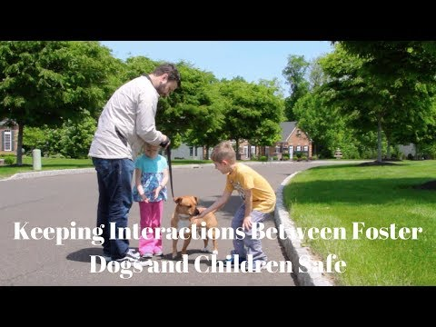 Keeping Interactions Between Foster Dogs and Children Safe