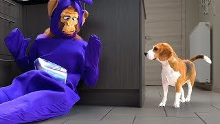 Funny Dogs vs Teletubby Monkey Prank :  Dogs Louie and Marie