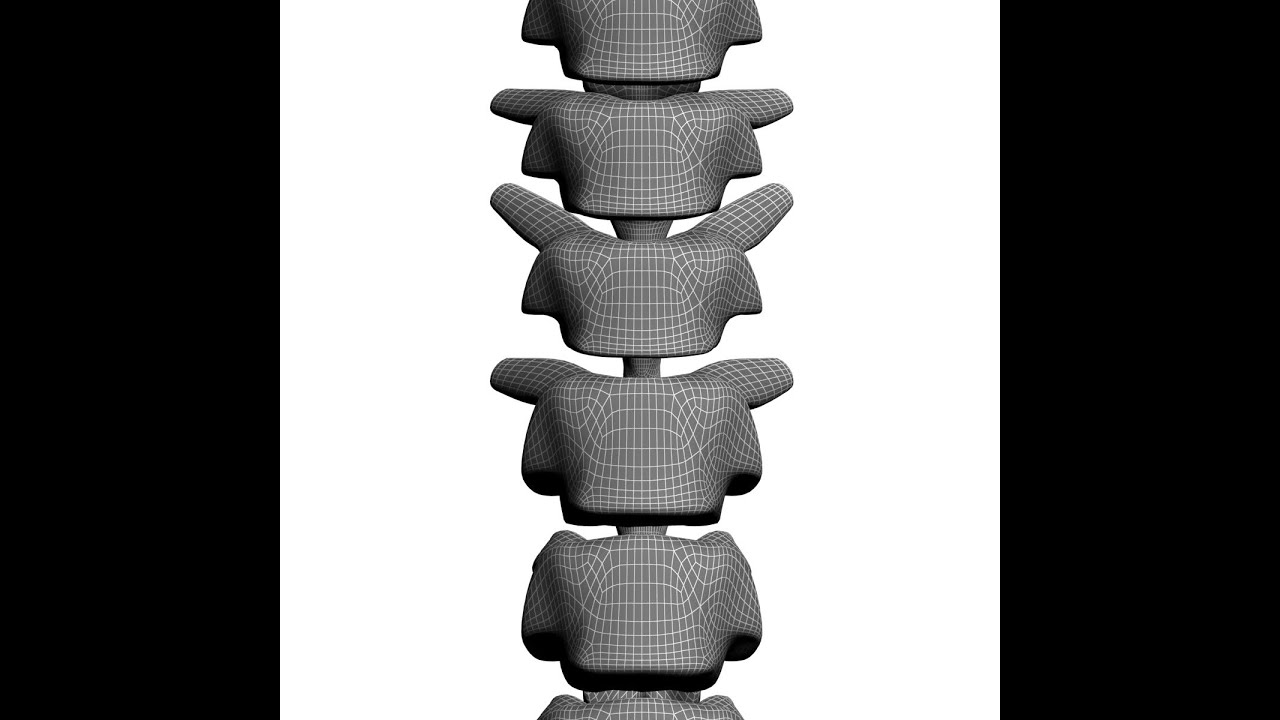 Human Spine 3d Model Youtube