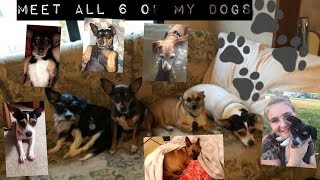 Teeen mom || meet all 6 of my dogs