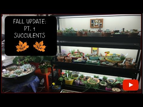 FALL PLANT TOUR UPDATE 2017:  PART 1 - SUCCULENTS