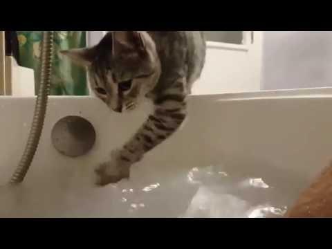 Crazy swimming cat