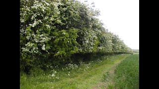 Seven ways to love your hedge - National Hedgerow Week 2021