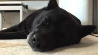 甲斐犬は怖いイメージの方が多いのですが、 我が家の甲斐犬は、やさしい...