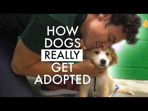 The Dog Adoption Specialist